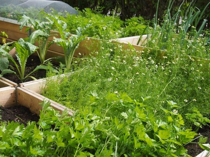 My daughter's vegetable garden eats my heartout!